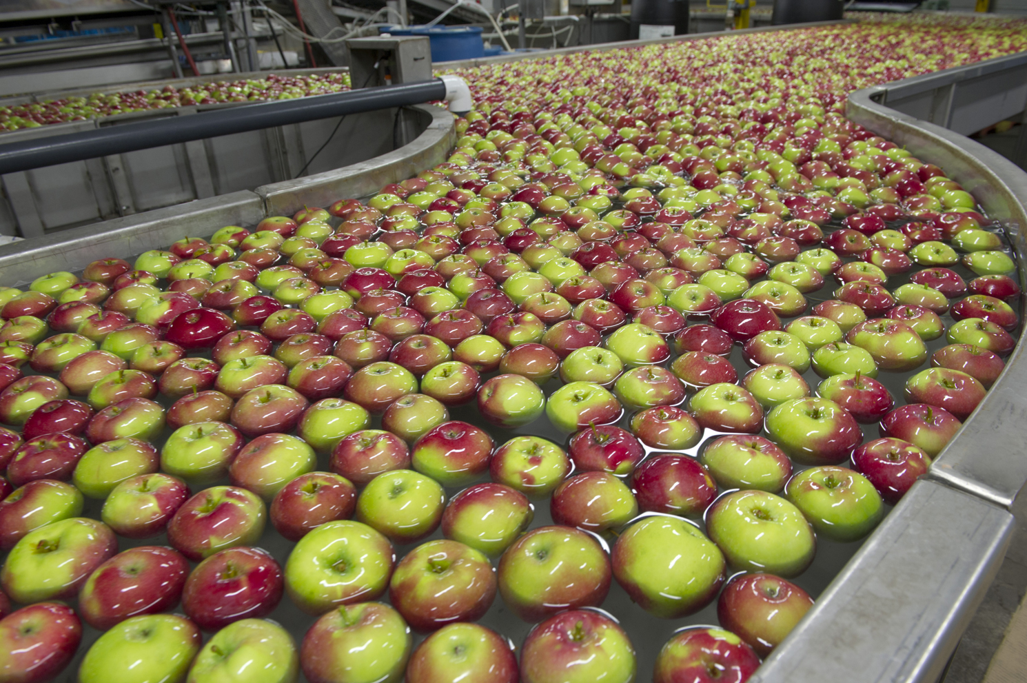 Apples are washed after they arrive at the Norfolk Fruit Growers' facility  - then they'll be packed ready for market.