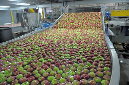 apples being packed